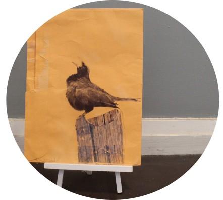 blackbird calling circle