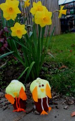 Daffs and chicks