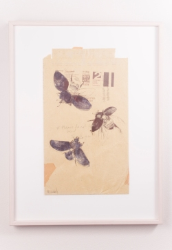Beetles in Flight - drawn on old envelope