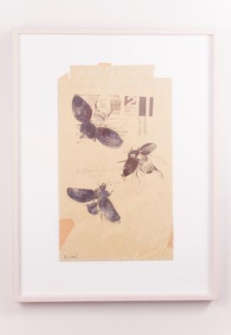 Beetles in Flight - drawn on old envelope
