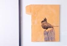 Blackbird Calling, on old national geographic envelope