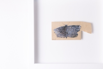 Black moth -drawing on envelope